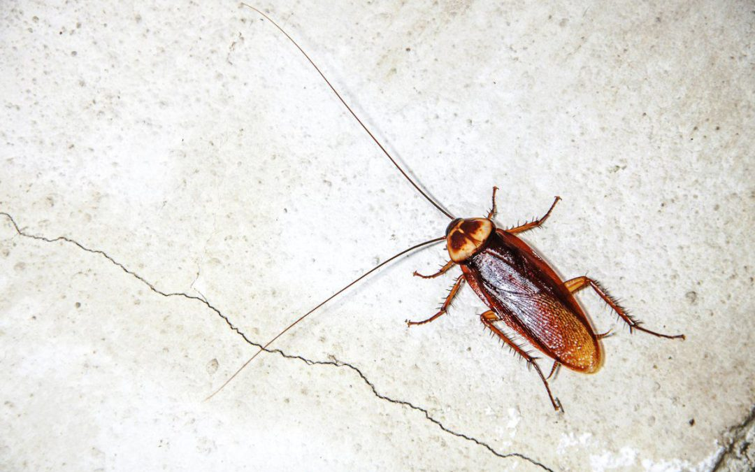 Cockroaches becoming treatment resistent
