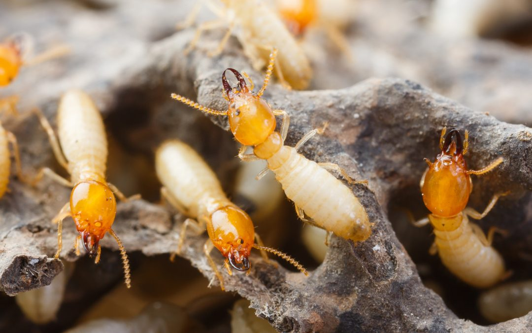 TERMITE PROTECTION Vs Treatment