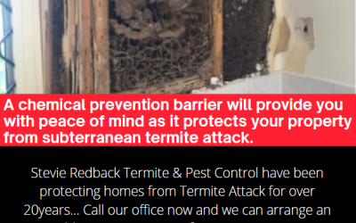 What to do if you find Termites